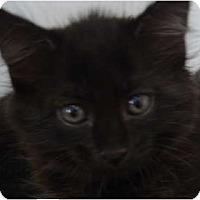 Adopt A Pet :: Buzz, Rex & Tommy - Winter Haven, FL