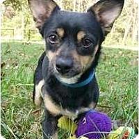 Adopt A Pet :: Turbo - Mocksville, NC