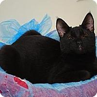 Adopt A Pet :: Lei - Trevose, PA