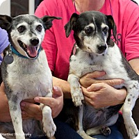 Adopt A Pet :: Thelma & Louise - Hagerstown, MD