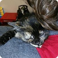 Adopt A Pet :: Brynn - Trevose, PA