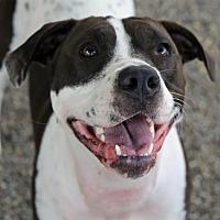 Adopt A Pet :: Eevee - Roseville, CA
