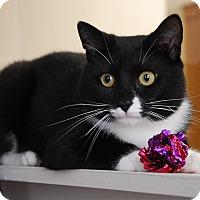 Adopt A Pet :: Daniel - Winchendon, MA