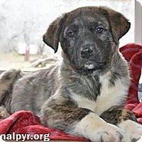 Adopt A Pet :: Jocelyn in MD - new pup! - Beacon, NY