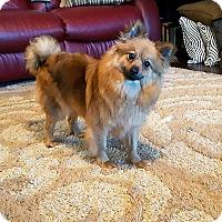 Adopt A Pet :: Oneida - conroe, TX