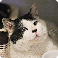 Adopt A Pet :: Rocky - Lincoln, NE