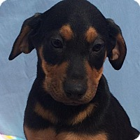 Adopt A Pet :: Fancy - East Sparta, OH