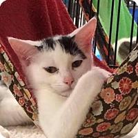 Adopt A Pet :: Twila - Monroe, GA