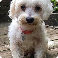Adopt A Pet :: Pete - Atlanta, GA
