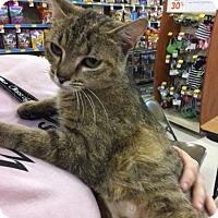 Adopt A Pet :: Amorette - Cincinnati, OH