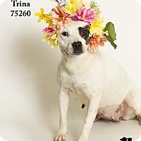 Adopt A Pet :: Trina - Baton Rouge, LA