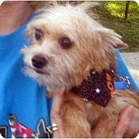Adopt A Pet :: Mickey - Conroe, TX