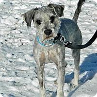 Adopt A Pet :: Abel - Cheyenne, WY