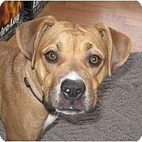 Adopt A Pet :: Roxy - Golden Valley, AZ