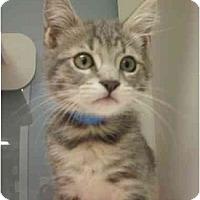 Adopt A Pet :: Eighty - Maywood, NJ