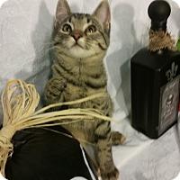 Adopt A Pet :: Sherriff - Clearfield, UT