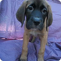 Adopt A Pet :: Leah & Delilah - Phoenix, AZ