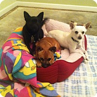 Adopt A Pet :: Huey, louie, Dewey - Raleigh, NC