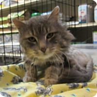 Adopt A Pet :: Mickey - Leamington, ON