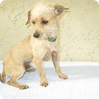 Adopt A Pet :: Murphy - Bonita, CA