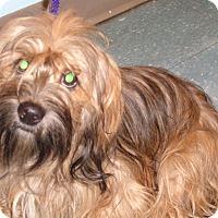 Adopt A Pet :: Artimis - Orlando, FL