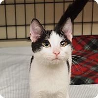 Adopt A Pet :: Domino - Ocean City, NJ