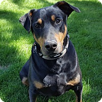 Adopt A Pet :: Rudy - Watch my Video! - Bend, OR