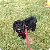 Adopt A Pet :: Audi -Adopted! - Kannapolis, NC