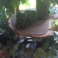 Adopt A Pet :: Mocha - Transfer, PA