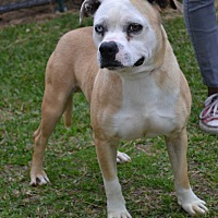 Adopt A Pet :: Blue Eye - Beaumont, TX