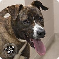 Adopt A Pet :: Harvey - Troy, OH
