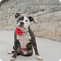 Adopt A Pet :: Lydia ~ Joy to the World! - Caldwell, NJ