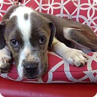 Adopt A Pet :: Smokie - Memphis, TN