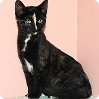 Adopt A Pet :: Lightening - Morganton, NC
