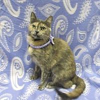 Adopt A Pet :: ANDROMEDA - Lexington, NC
