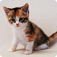 Adopt A Pet :: Sierra - Toccoa, GA