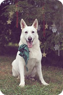 German Shepherd Dog Dog for adoption in Greeneville, Tennessee - Dante