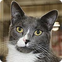 Adopt A Pet :: Roady - Harrisburg, NC