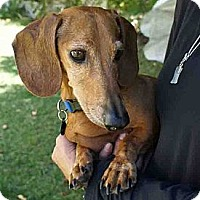 Adopt A Pet :: Prince William - San Jose, CA