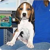 Adopt A Pet :: Scout - Minneola, FL