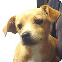 Adopt A Pet :: Kirk - Greencastle, NC