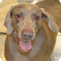 Adopt A Pet :: Gypsy - Scottsdale, AZ