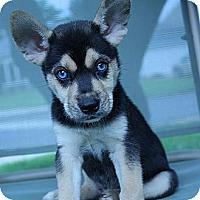 Adopt A Pet :: Bruce - South Jersey, NJ