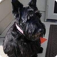 Adopt A Pet :: Lulu-Pending Adoption - Omaha, NE