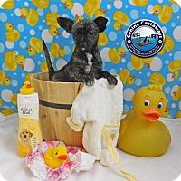 Adopt A Pet :: Cha Cha - Arcadia, FL
