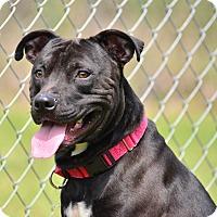 Adopt A Pet :: BUCKEY - Brooksville, FL