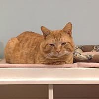 Adopt A Pet :: Bastion - Byron Center, MI