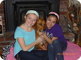 Labrador Retriever/Coonhound (Unknown Type) Mix Dog for adoption in Worcester, Massachusetts - Melanie