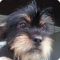 Adopt A Pet :: Thatcher - Cumberland, MD