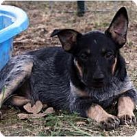 Adopt A Pet :: Jax - Siler City, NC